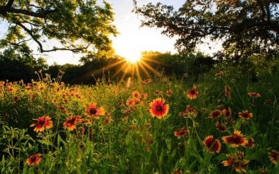 This Is the Best Time to See Wildflowers in Texas Hill Country