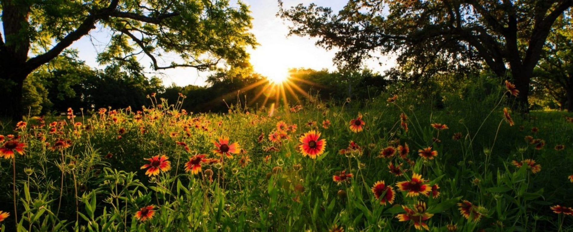 Best Time To See Wildflowers In Texas Hill Country 1500x609@2x Scaled