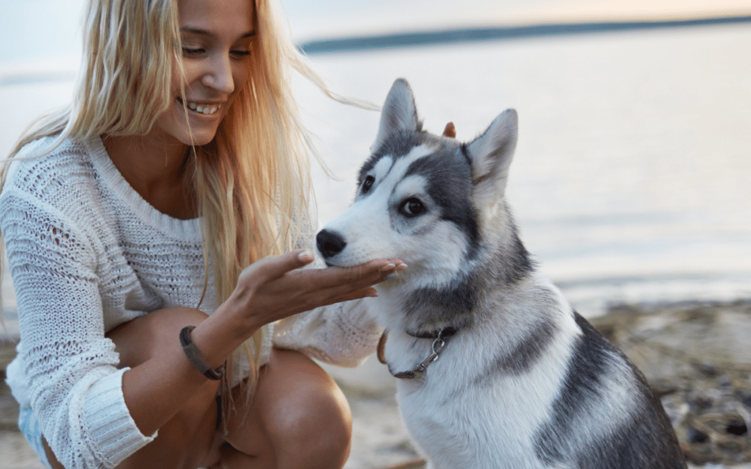 summer vacation pet care