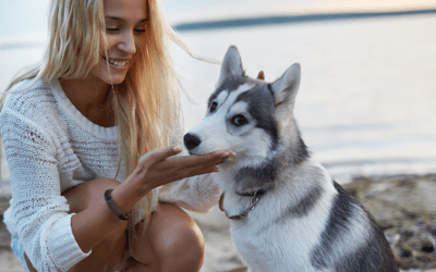 Summer Vacation Pet Care Tips