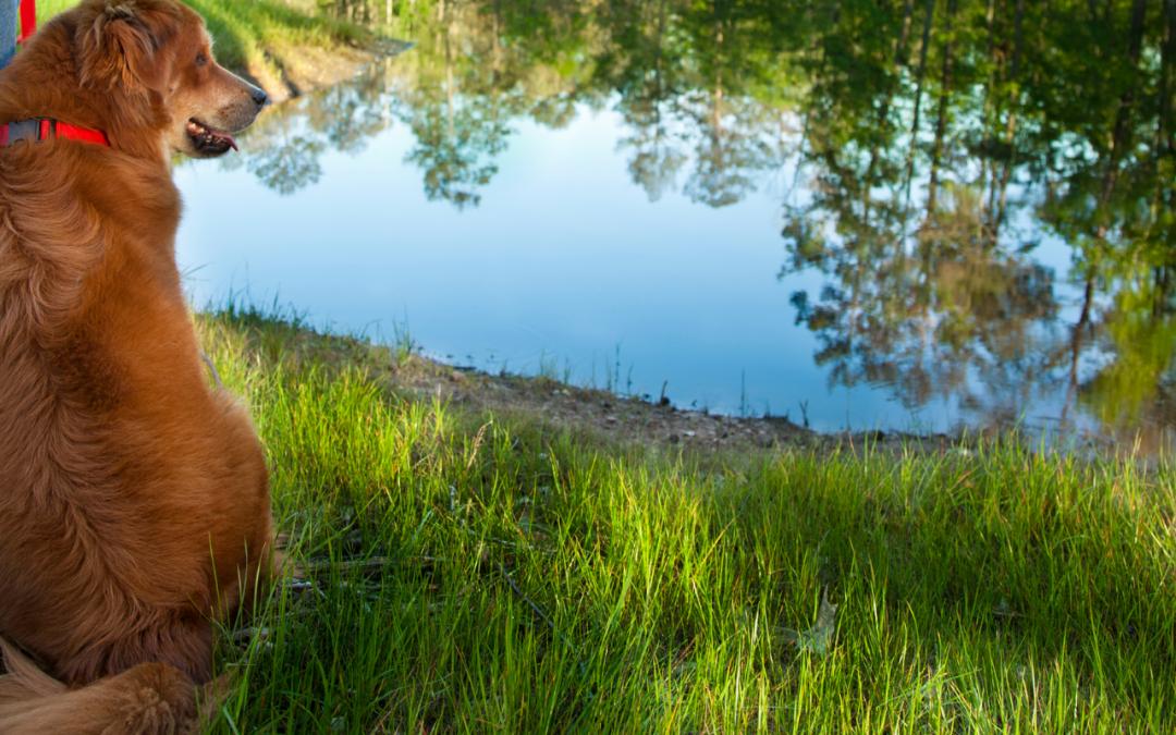 Pet-Friendly Adventures in Wimberley