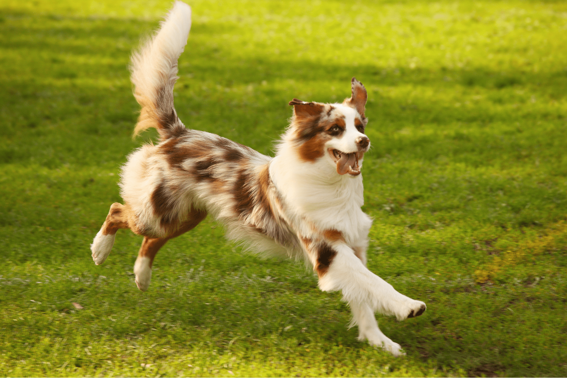 pet-friendly wimberley